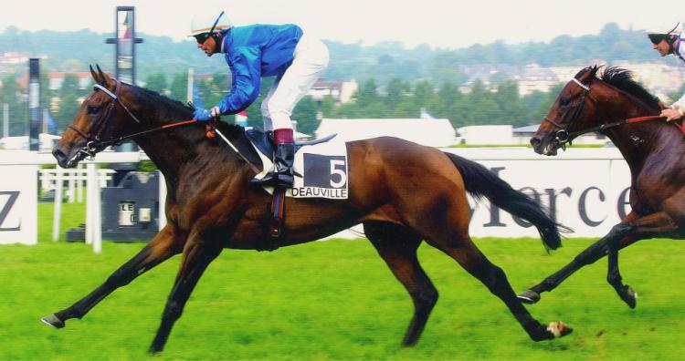 horse-slider-1